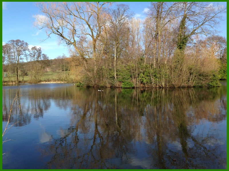 Burton mere lake with ducks on